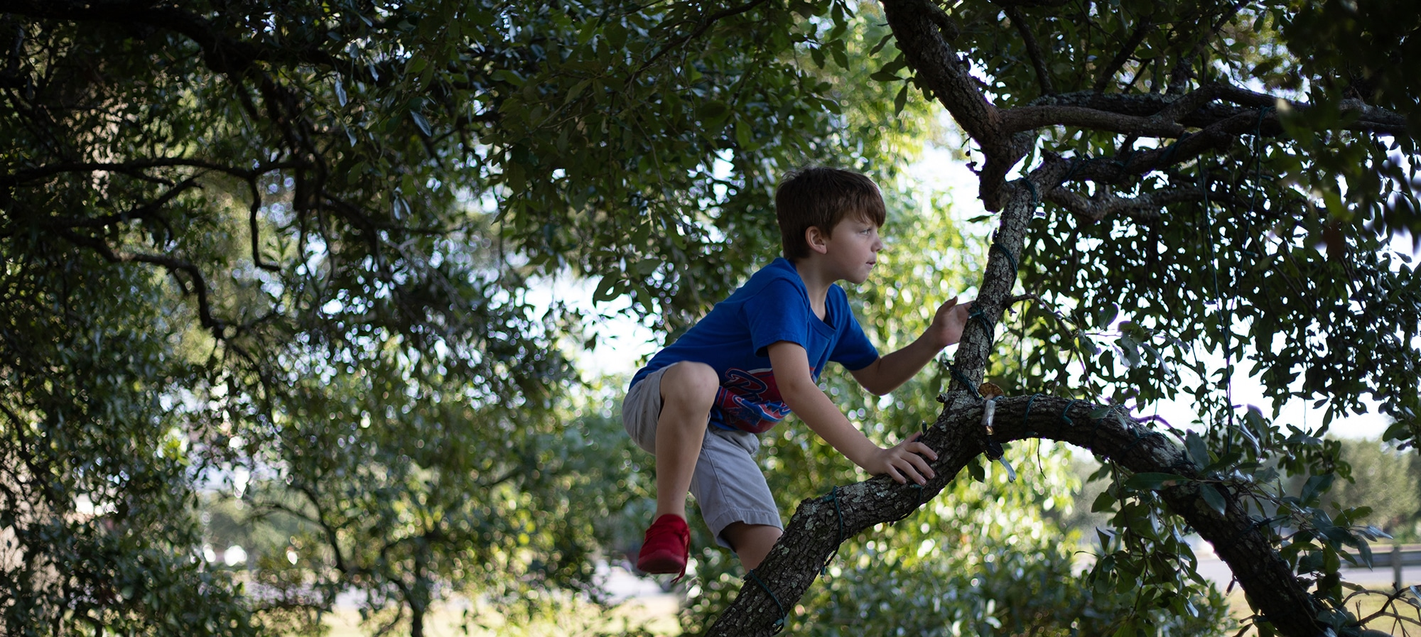 Camping La Dordogne Verte : Tree Climbing